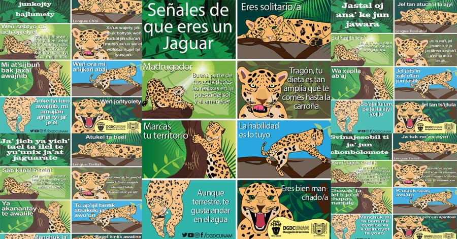 Señales que eres un Jaguar